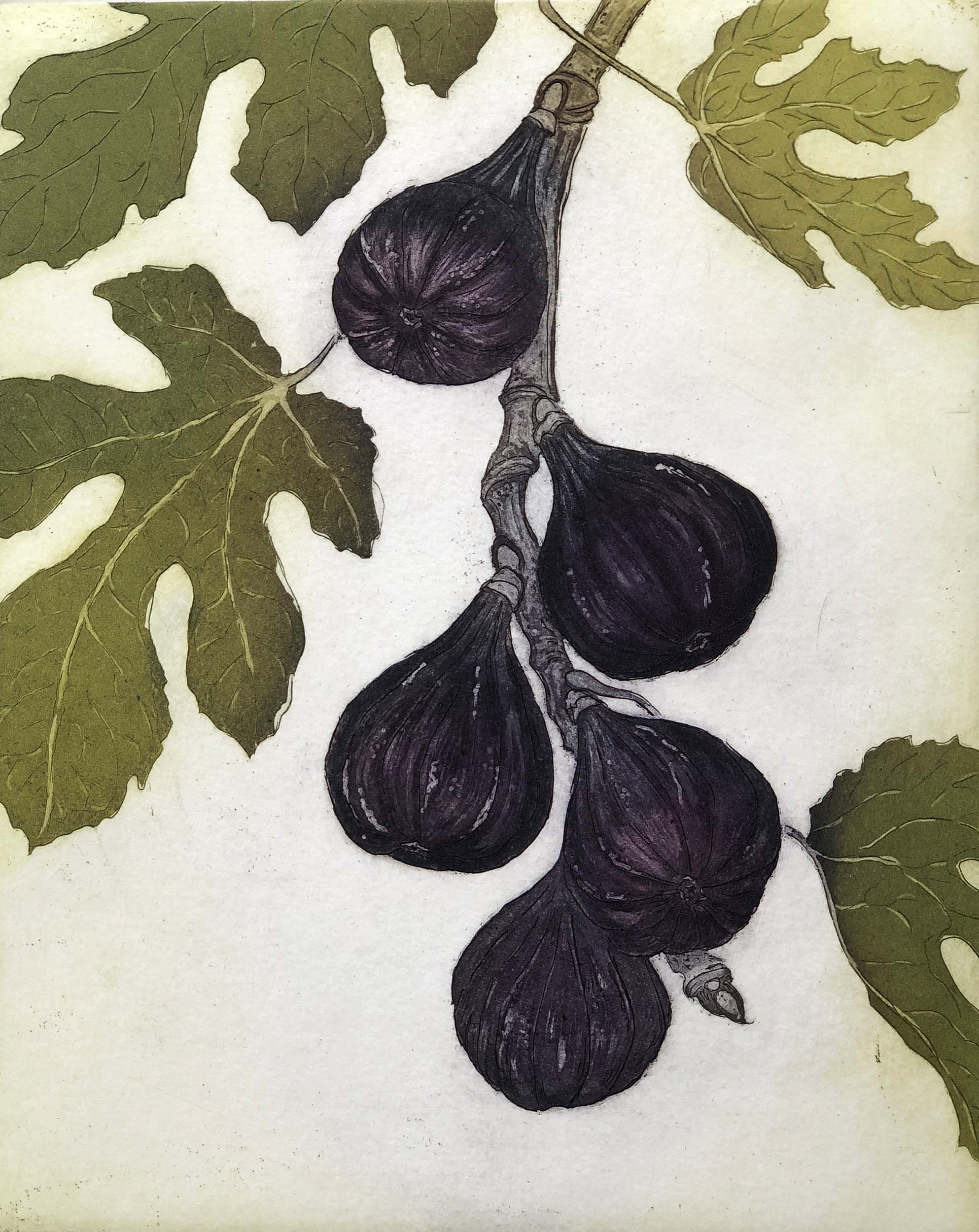 Black Mission Fig