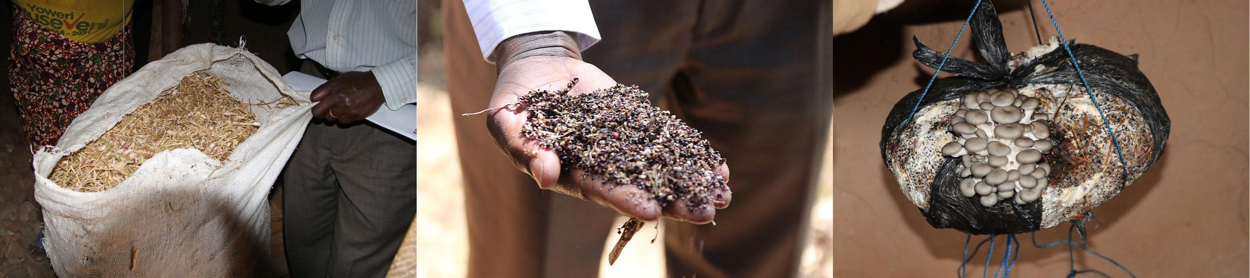 Bean straw and sorghum husks for growing medium; oyster mushroom growing bag