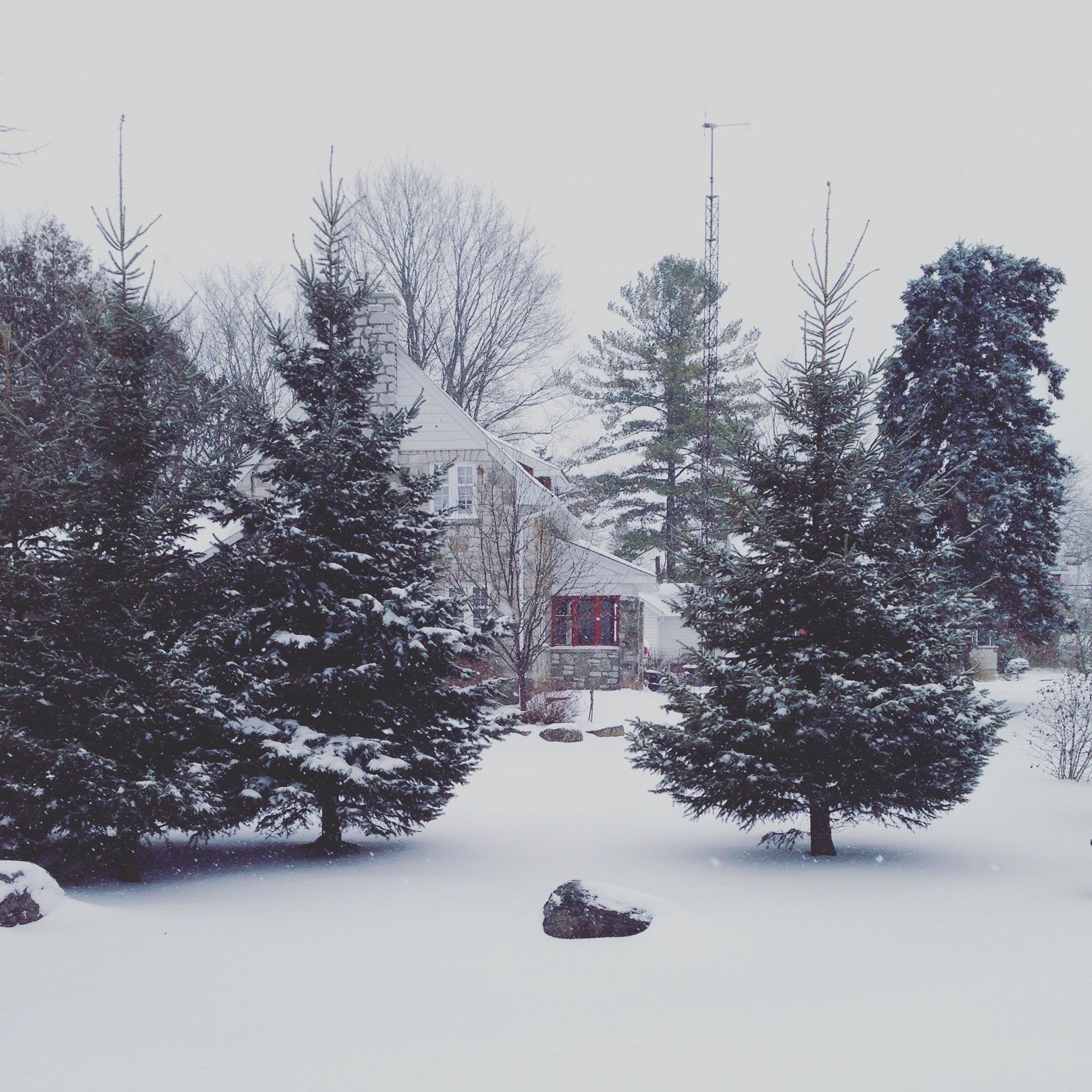 Winter #15.jpg