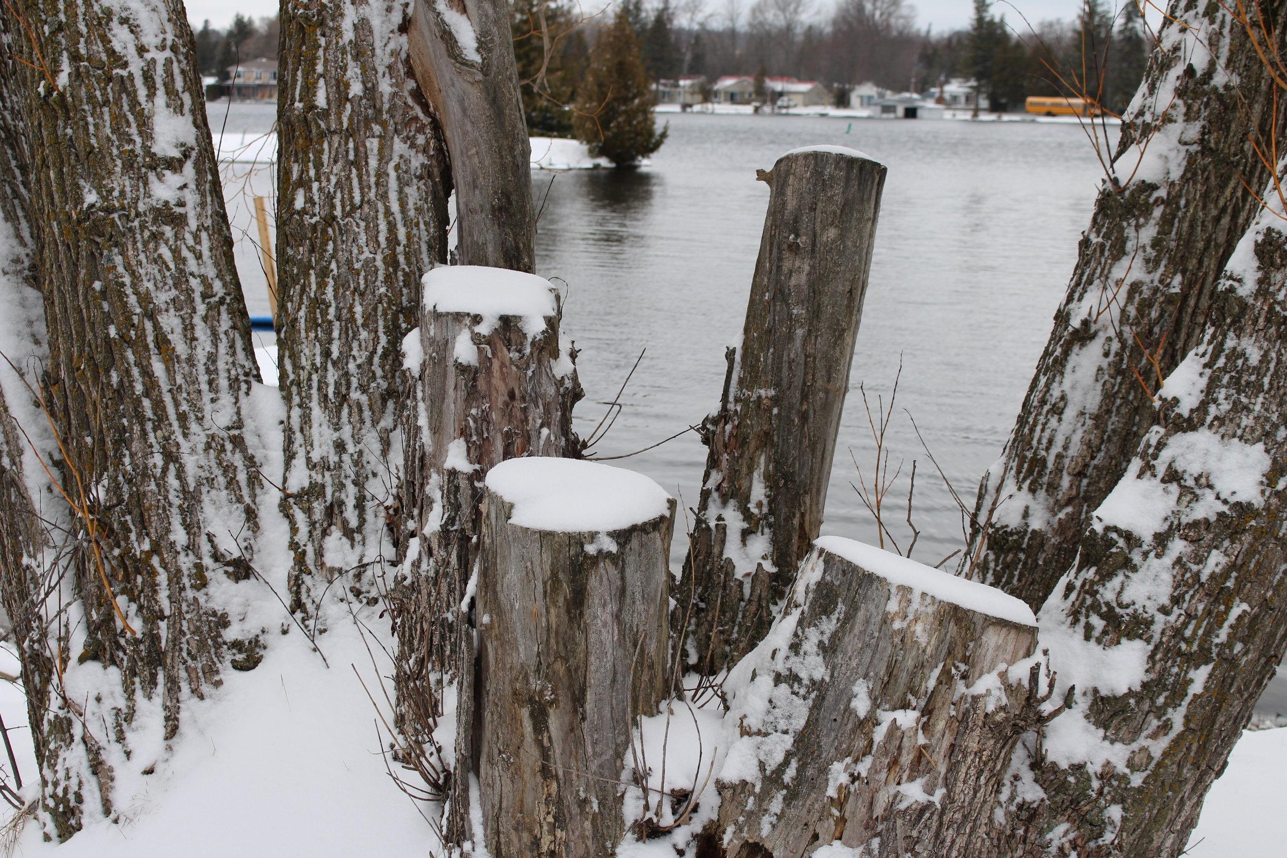Winter #26.jpg