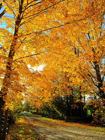 fall kawartha-autumn-color.jpg
