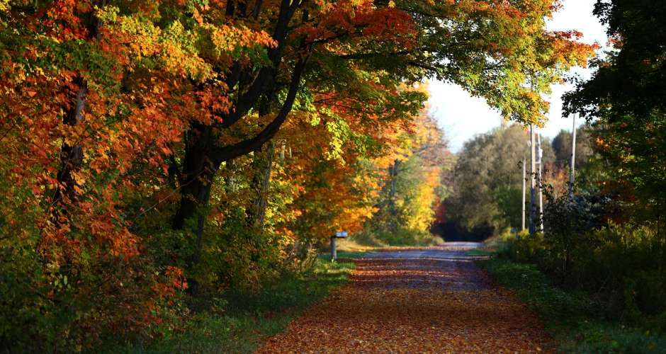 fall kawarthas.jpg