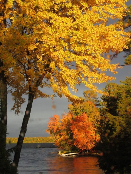 FALL COLOURS TOURS