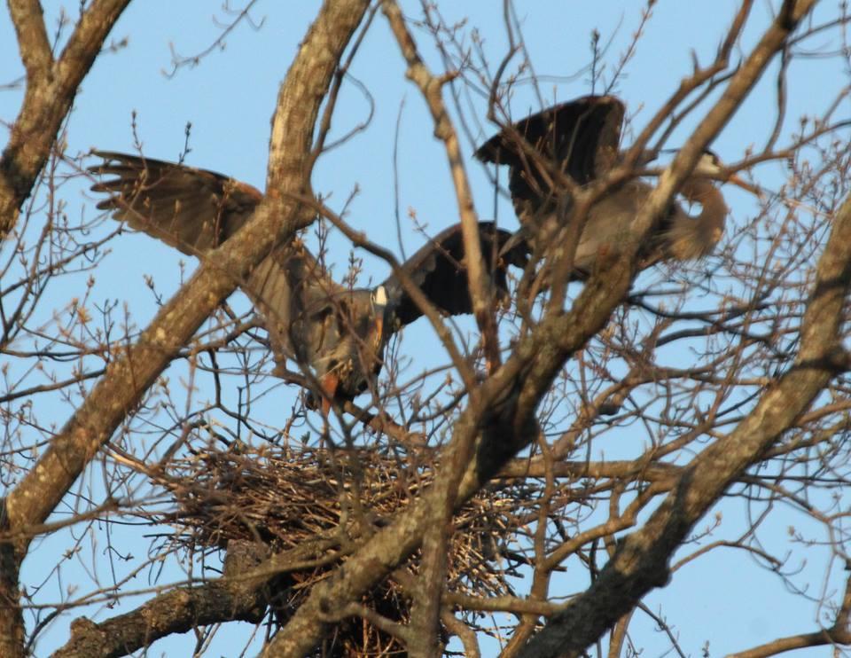 barbara craven bird5.jpg