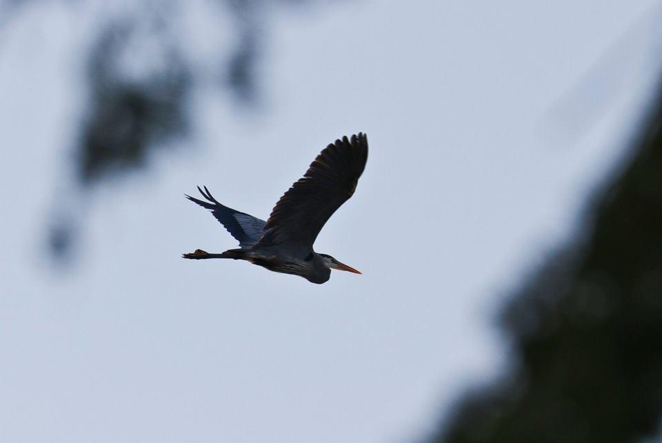 Steve Jacobs bird2.jpg