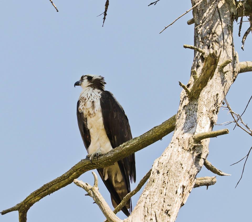steve jacobs bird4.jpg