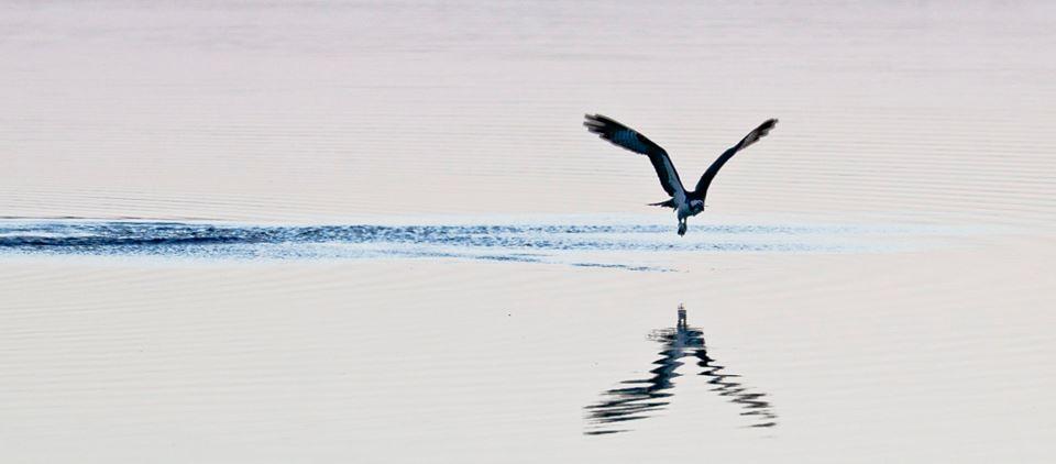 steve jacobs bird7.jpg