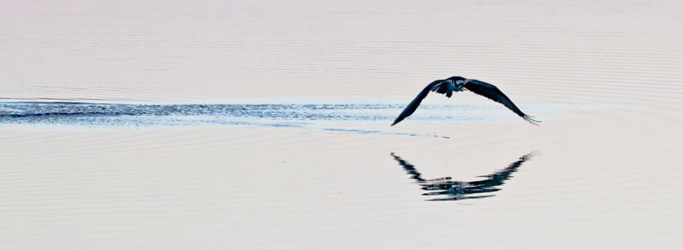 steve jacobs bird8.jpg