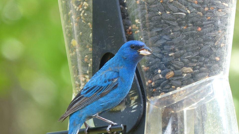 Larry Holden bird1.jpg