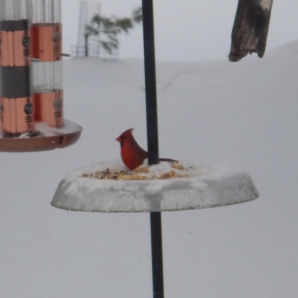 april scott bird6.jpg