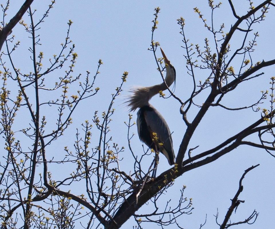 steve jacobs bird11.jpg