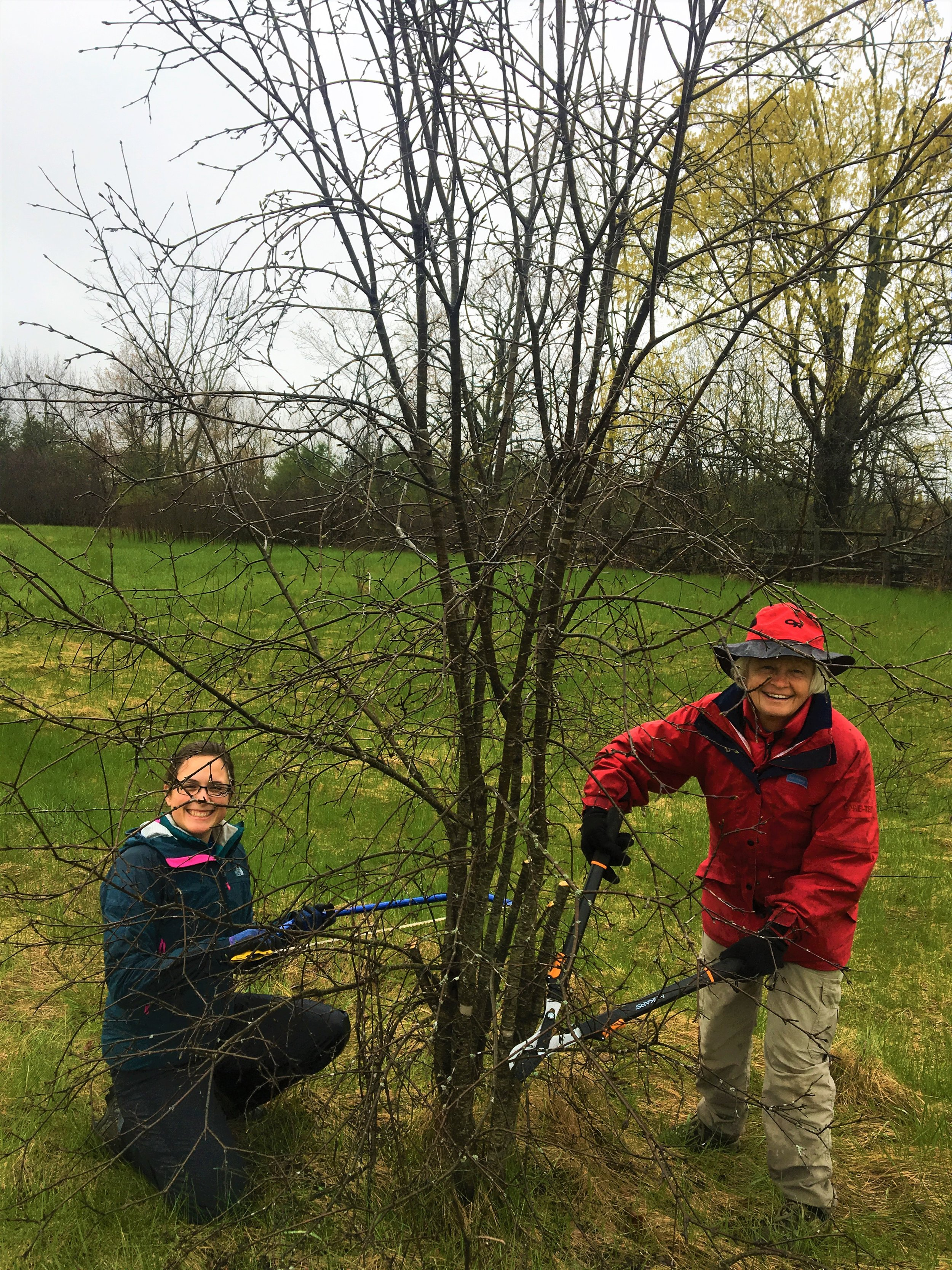 Buckthorn-Removal-at-Dance-Nature-Sanctuary.jpg