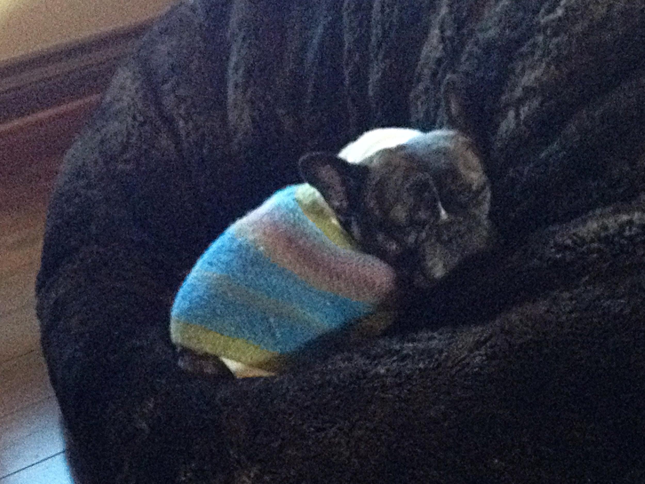 Cesar was always the cutest when he was asleep