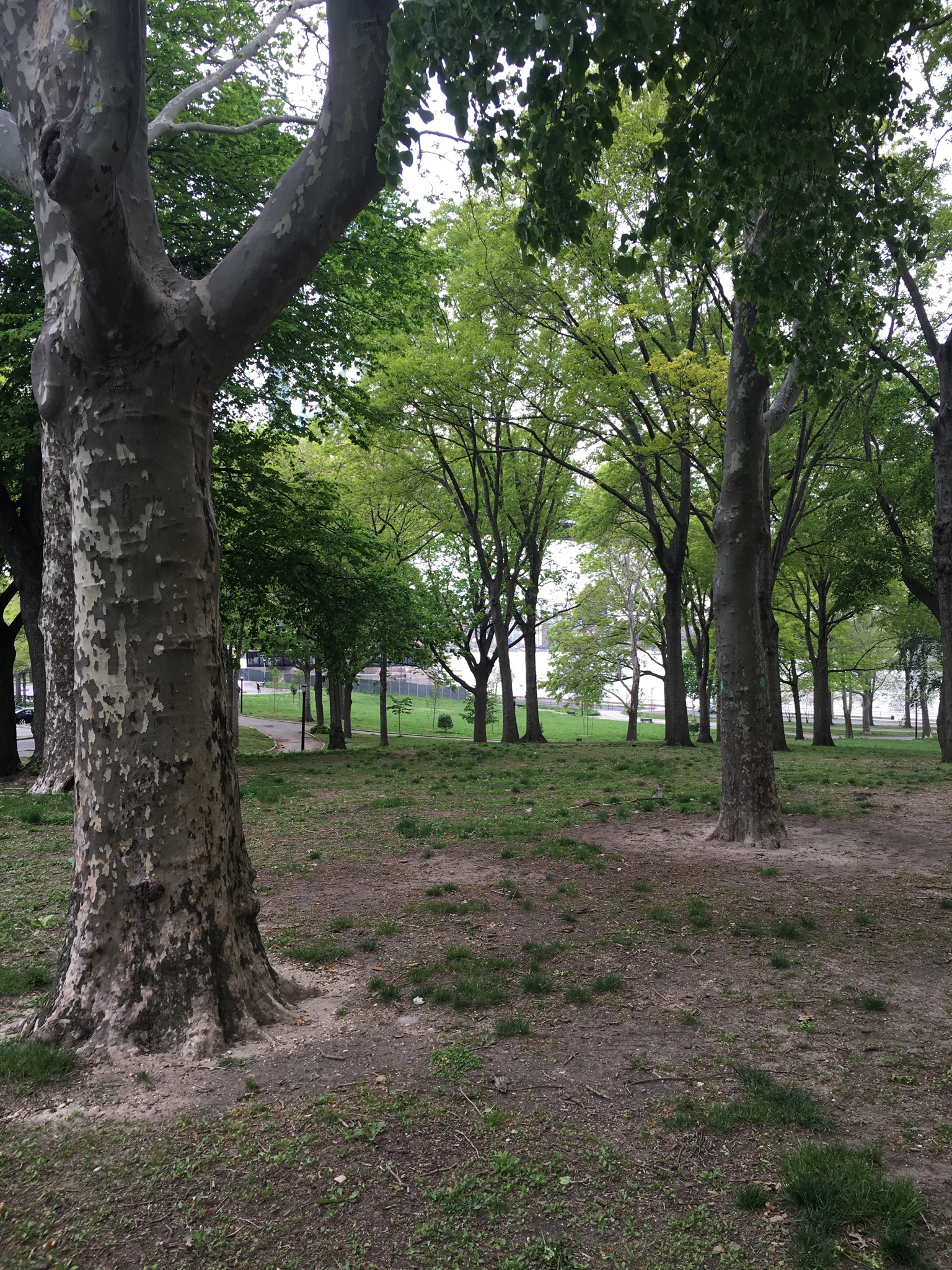 View of the trees from Astoria Park