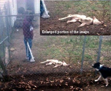 Kennett Dogs
