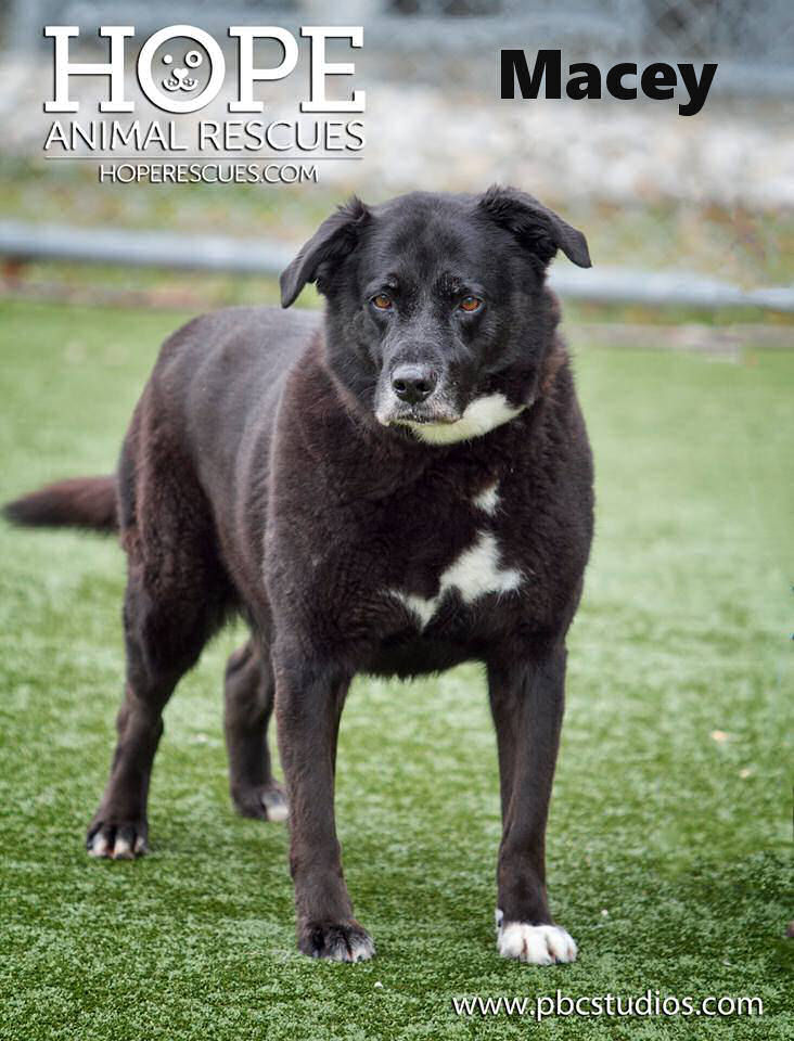All Adoptable Dogs — Hope Animal Rescues