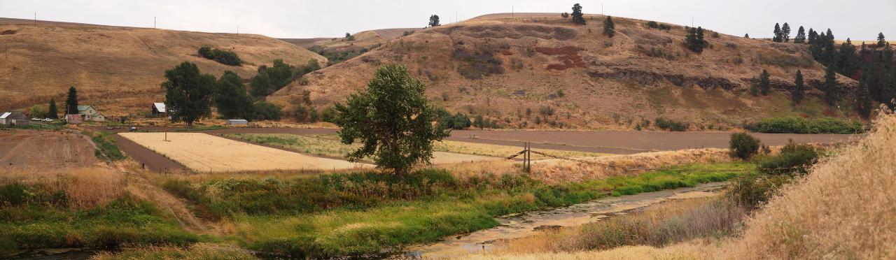 Palouse Colony Farm and Heritage Grain Plots (Turkey Red wheat, Scots Bere barley)