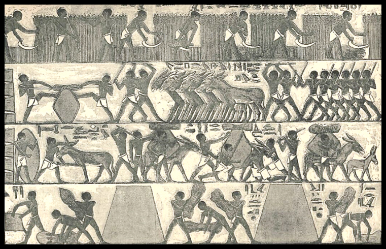 """Cutting and Carrying the Harvest"" (Egyptian Old Kingdom Paintings, c. 2400 BC), Henri Faucher-Gudin (after a photograph by Johannes Dümichen), Gaston Maspero, History of Egypt, Chaldea, Syria, Babylonia, and Assyria (London, 1903)"