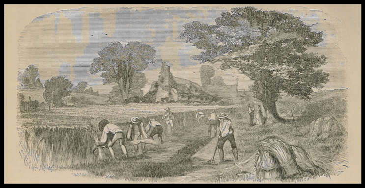 Reaping in the Olden Time;  Above:  Reaping in Our Time  (1857)