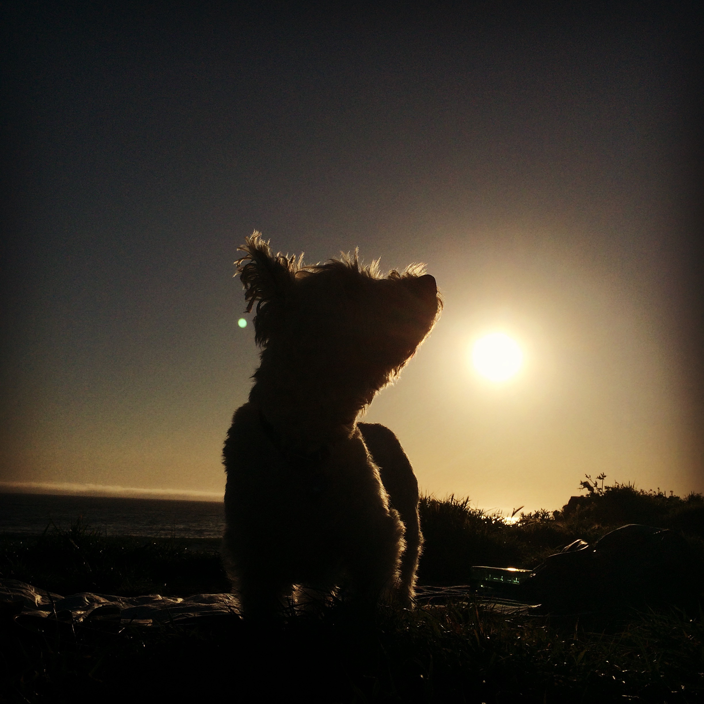 Don-Don enjoying his last sunset with us in Half Moon Bay, a few hours before we sent him off.