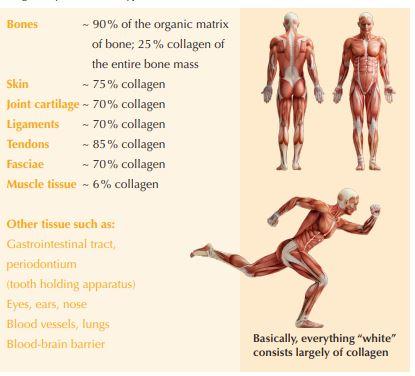Collagen Dry Matter