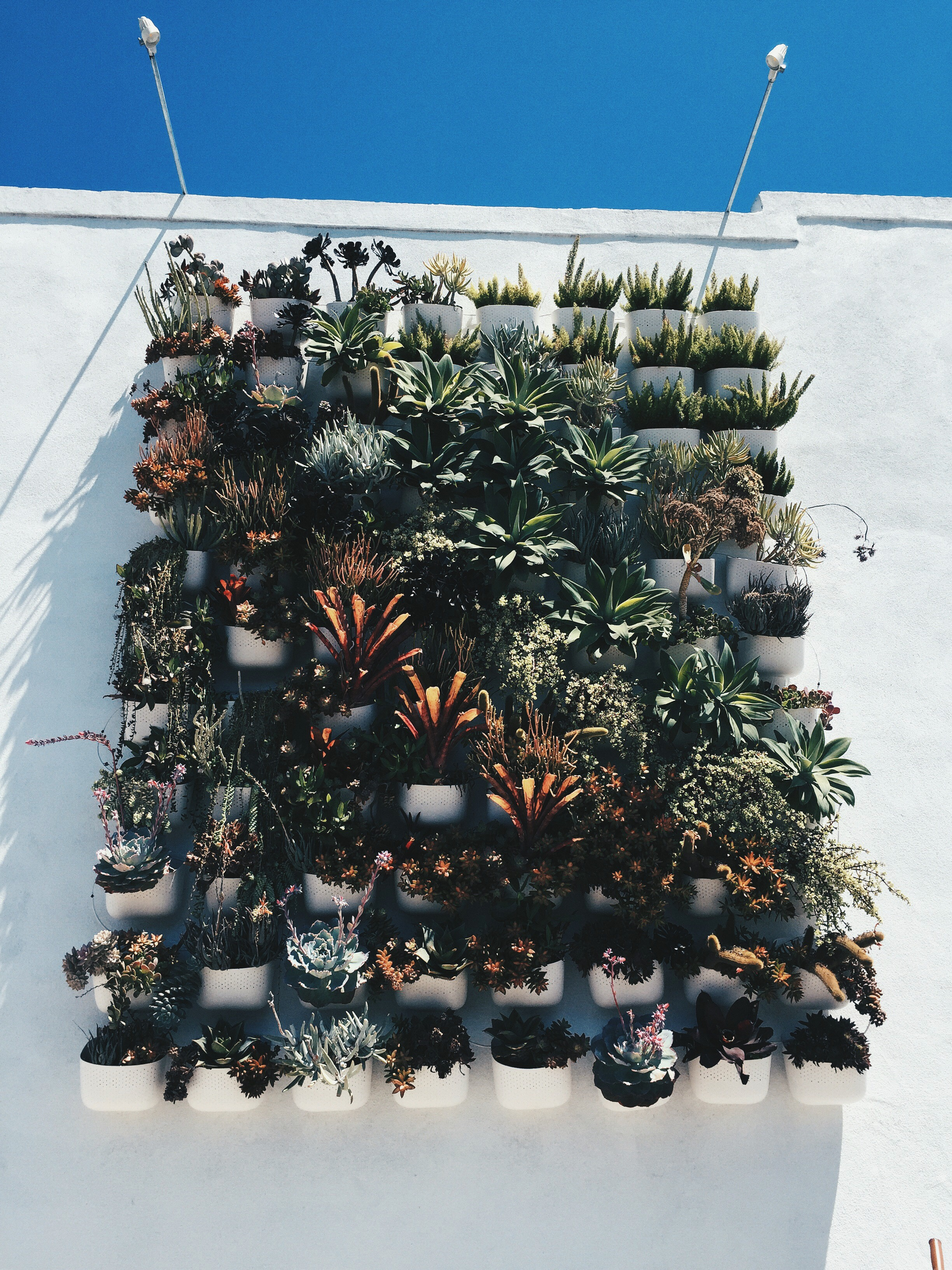 I also visited a little hipster store called Pigment. It is one of those cute shops that sells random things and adorable cards, and plants, and apartment accessories that you don't need but that you definitely now want. They had this incredible succulent wall outside. It was heaven.