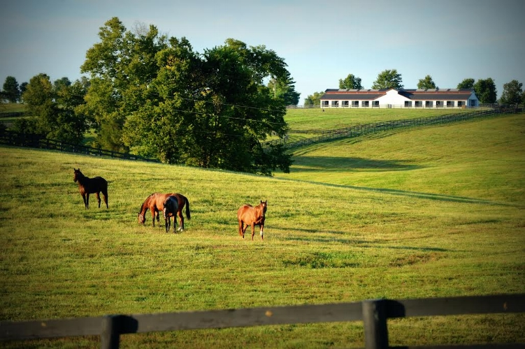 Taylor Made Farm is located in Nicholasville, KY - about 17 miles from Keeneland Race Course. (Photo courtesy: Laura Donnell/Taylor Made).