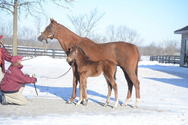 Irap, as a foal, is pictured with his dam Silken Cat at Taylor Made Farm in Nicholasville, KY. Irap was the last foal out of the Canadian Champion mare. (Photo: Laura Donnell/Taylor Made)