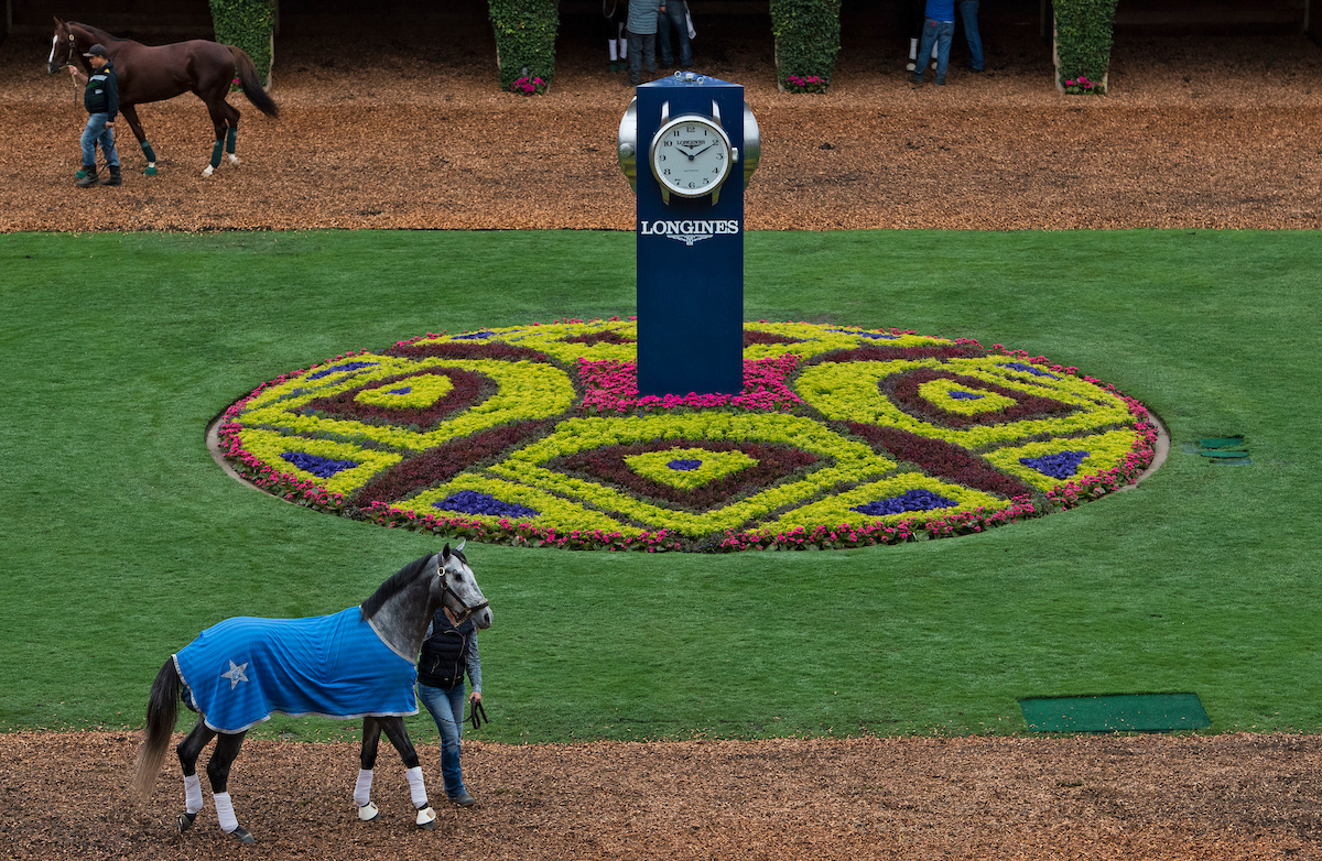 Horses walk through the paddock at Del Mar during Breeders' Cup week. The races begin today at 5:25 p.m. EDT.(Photo by Michael McInally/Eclipse Sportswire/Breeders Cup)