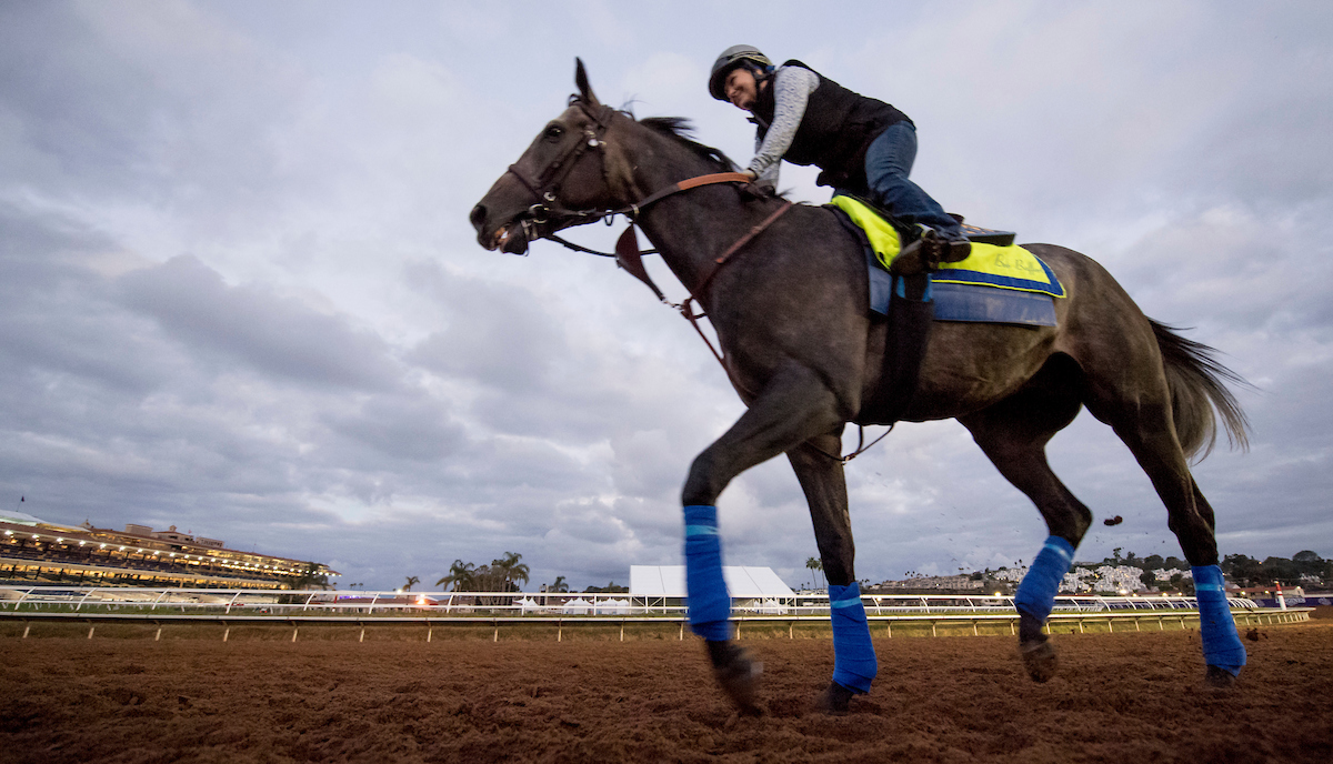 Arrogate, who has earned more than $17 million on the track, will defend his title in the Breeders' Cup Classic today at Del Mar. Post time for the race is 8:35 p.m. EDT. (Photo by Scott Serio/Eclipse Sportswire/Breeders Cup)