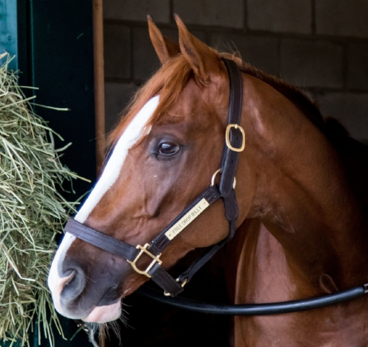 Grade-1 winner Free Drop Billy runs today in the Breeders' Cup Juvenile at Del Mar. Post time is 6:58 p.m. EDT. (Photo by Casey Phillips/Eclipse Sportswire/Breeders Cup)