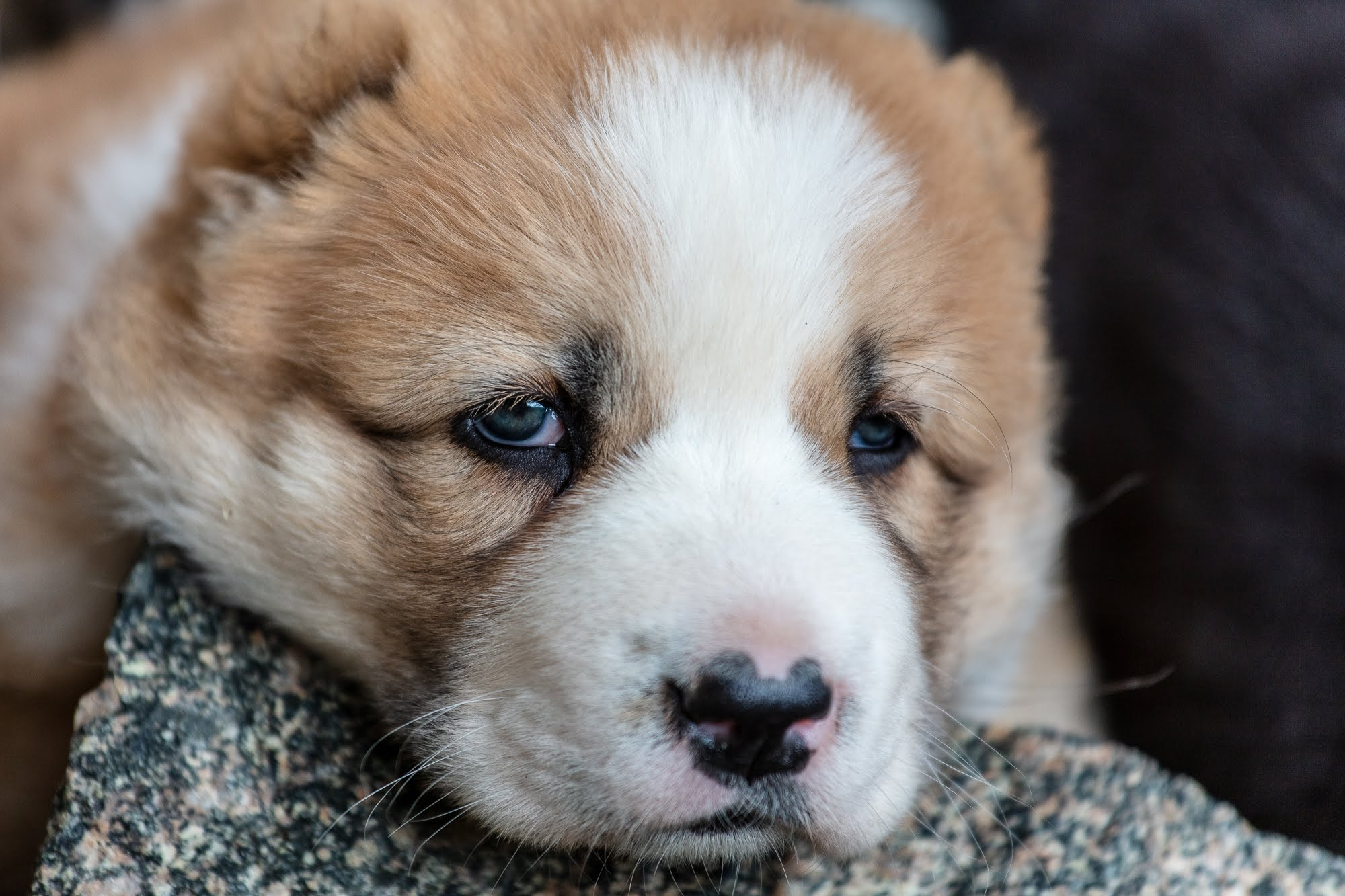 puppies-2010.jpg