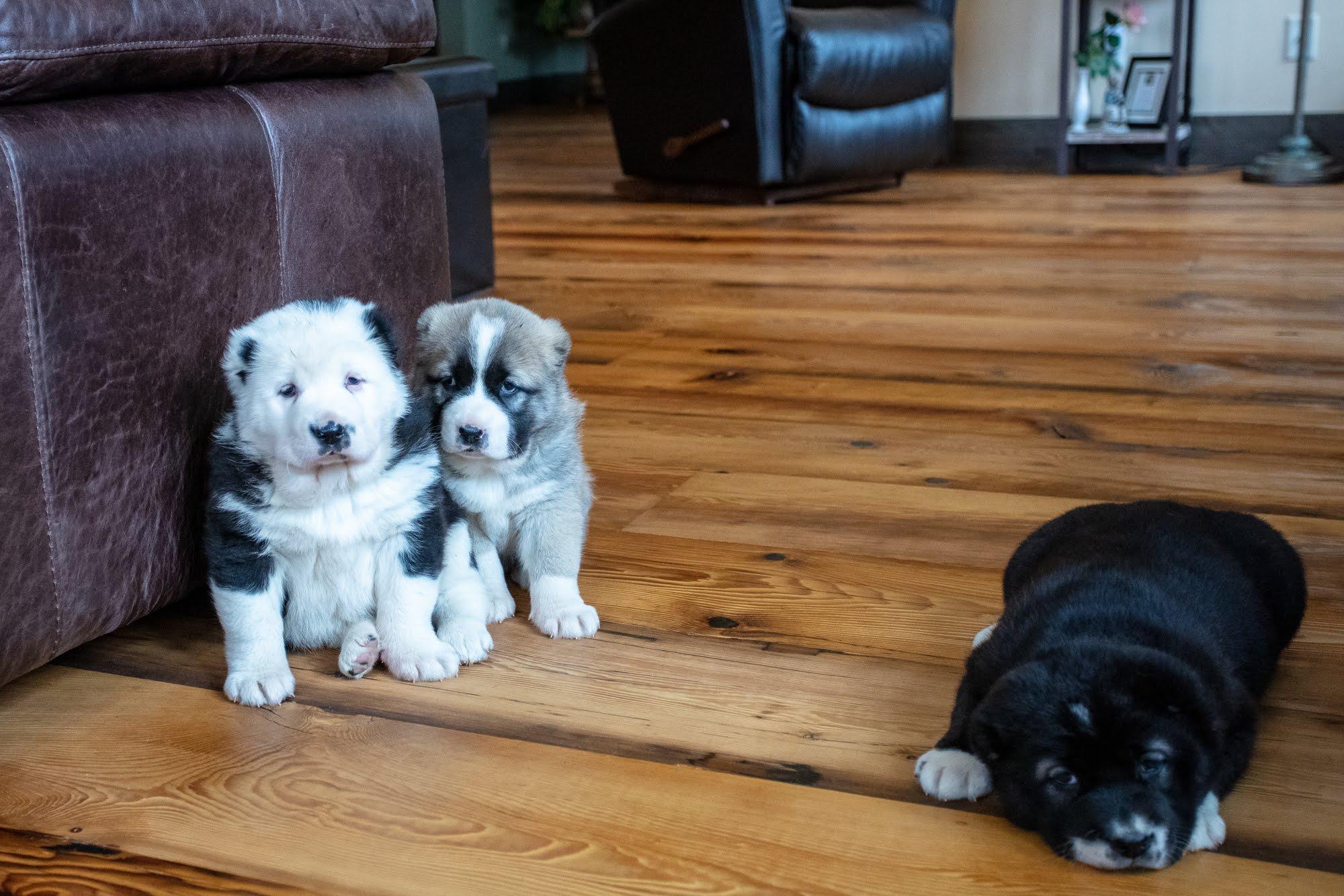 puppies-2097.jpg