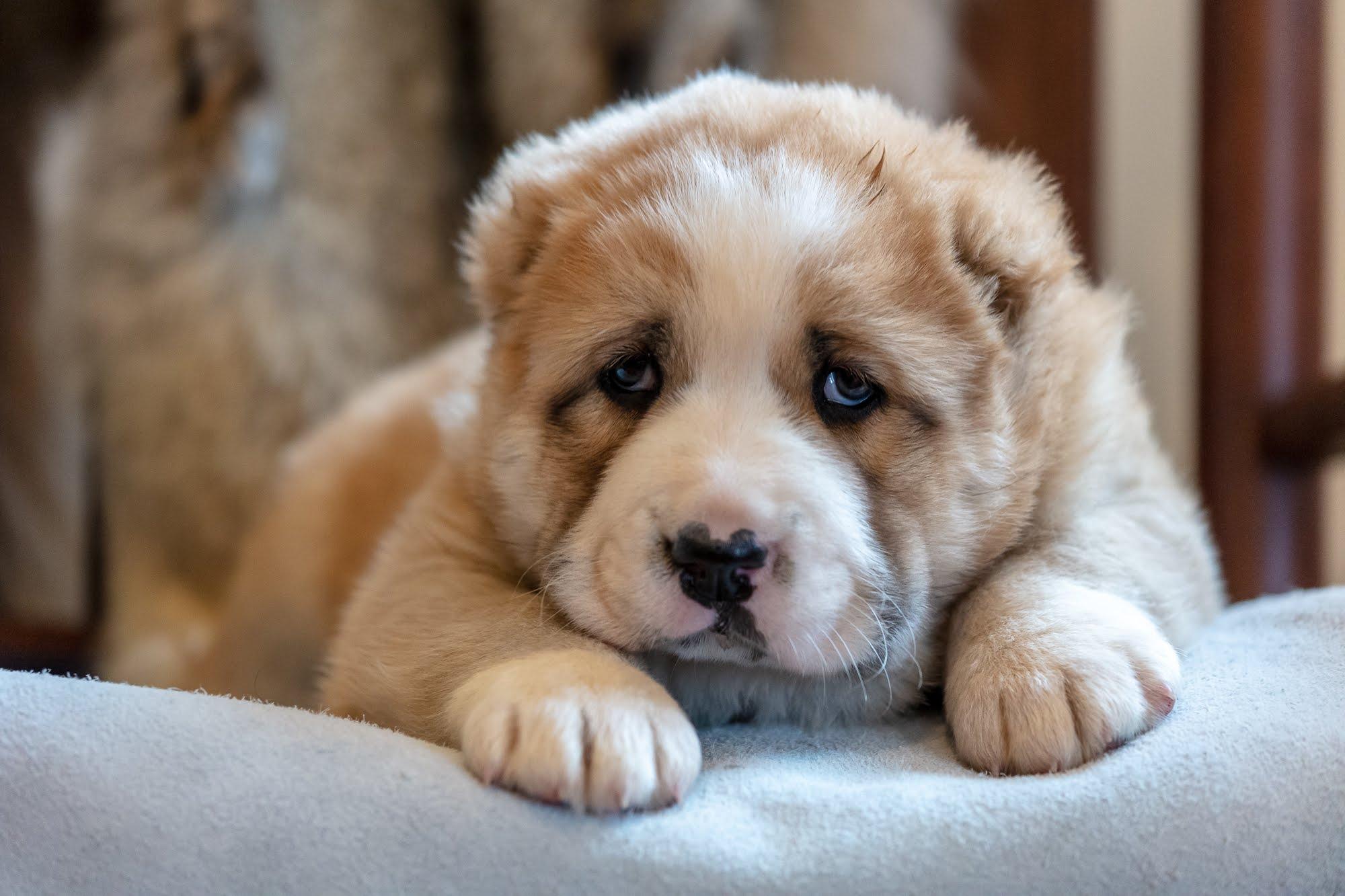 puppies-2231.jpg