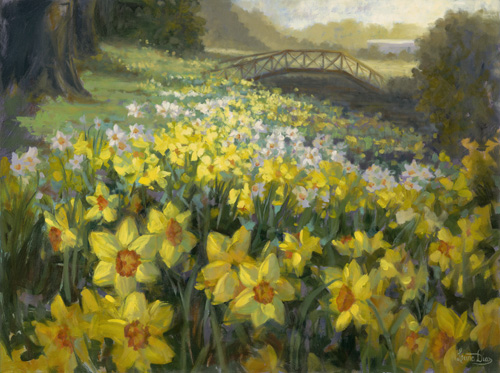 Daffodils at Mona Vale
