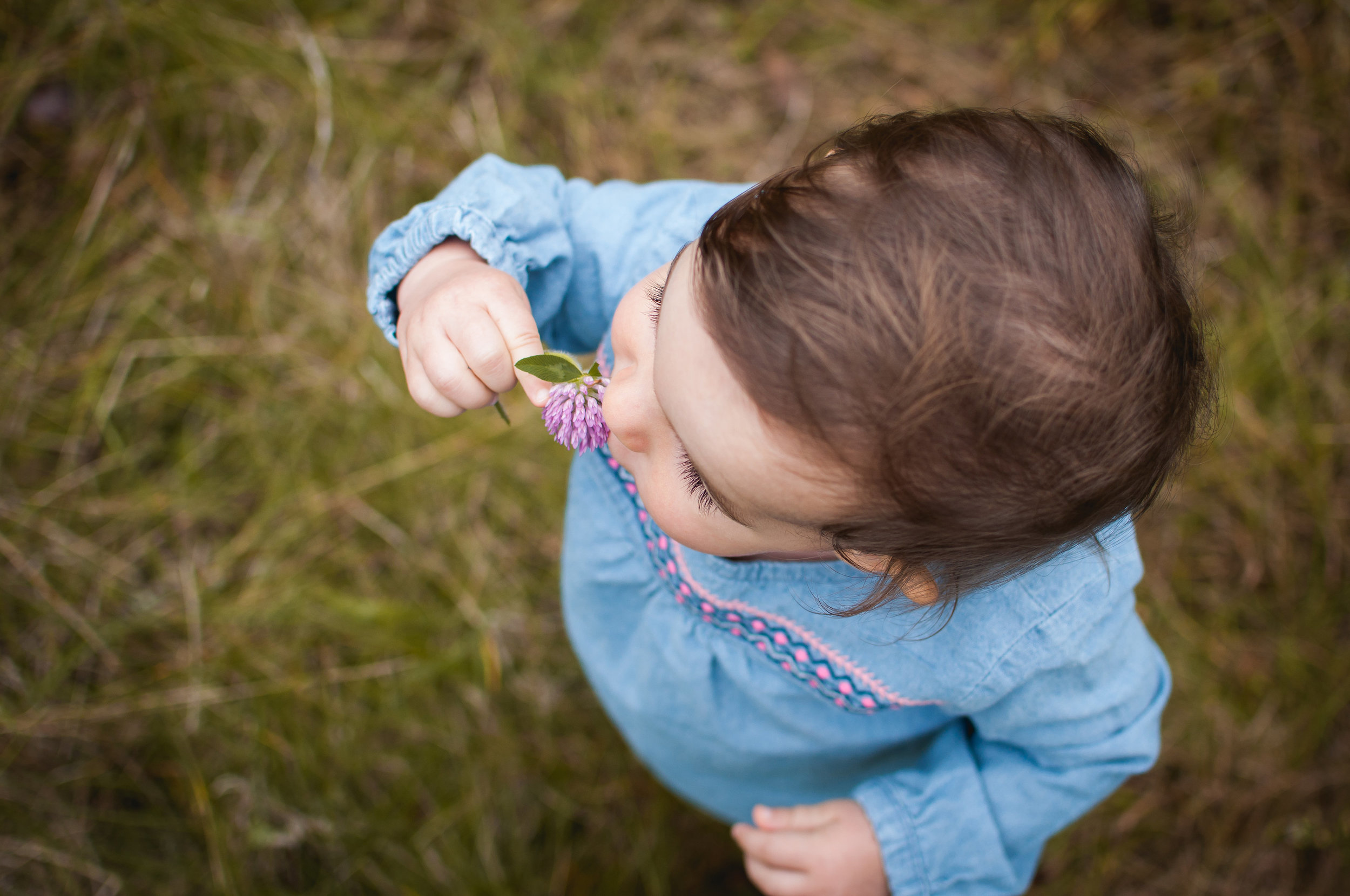 Child holds up a flower during family portrait session in Peoria Illinois area.