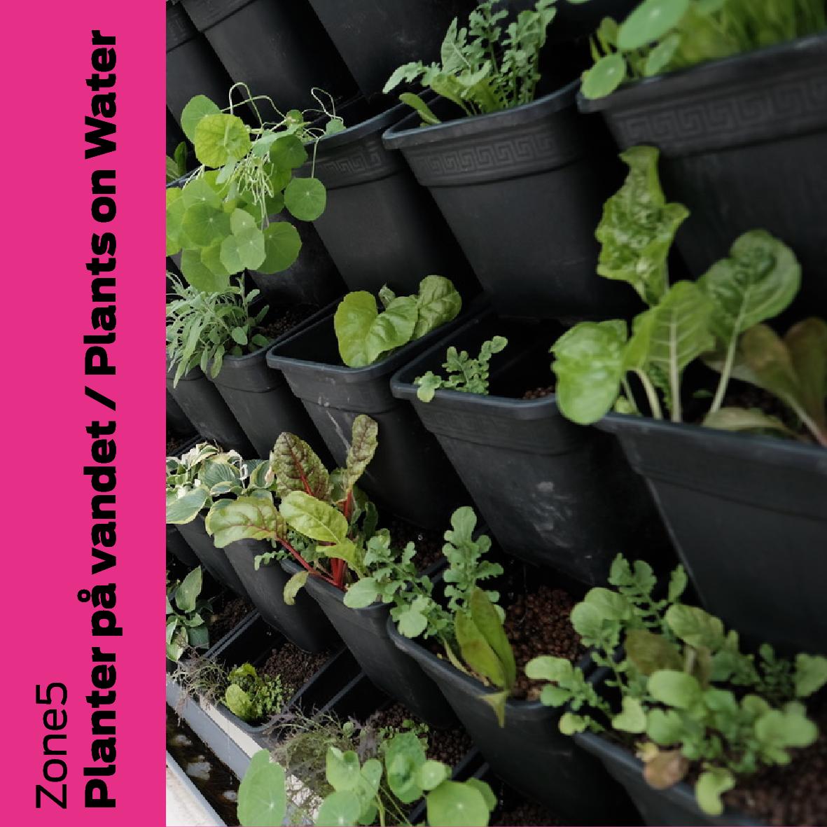 Zone5 (NE): Planter på vand / Plants on water
