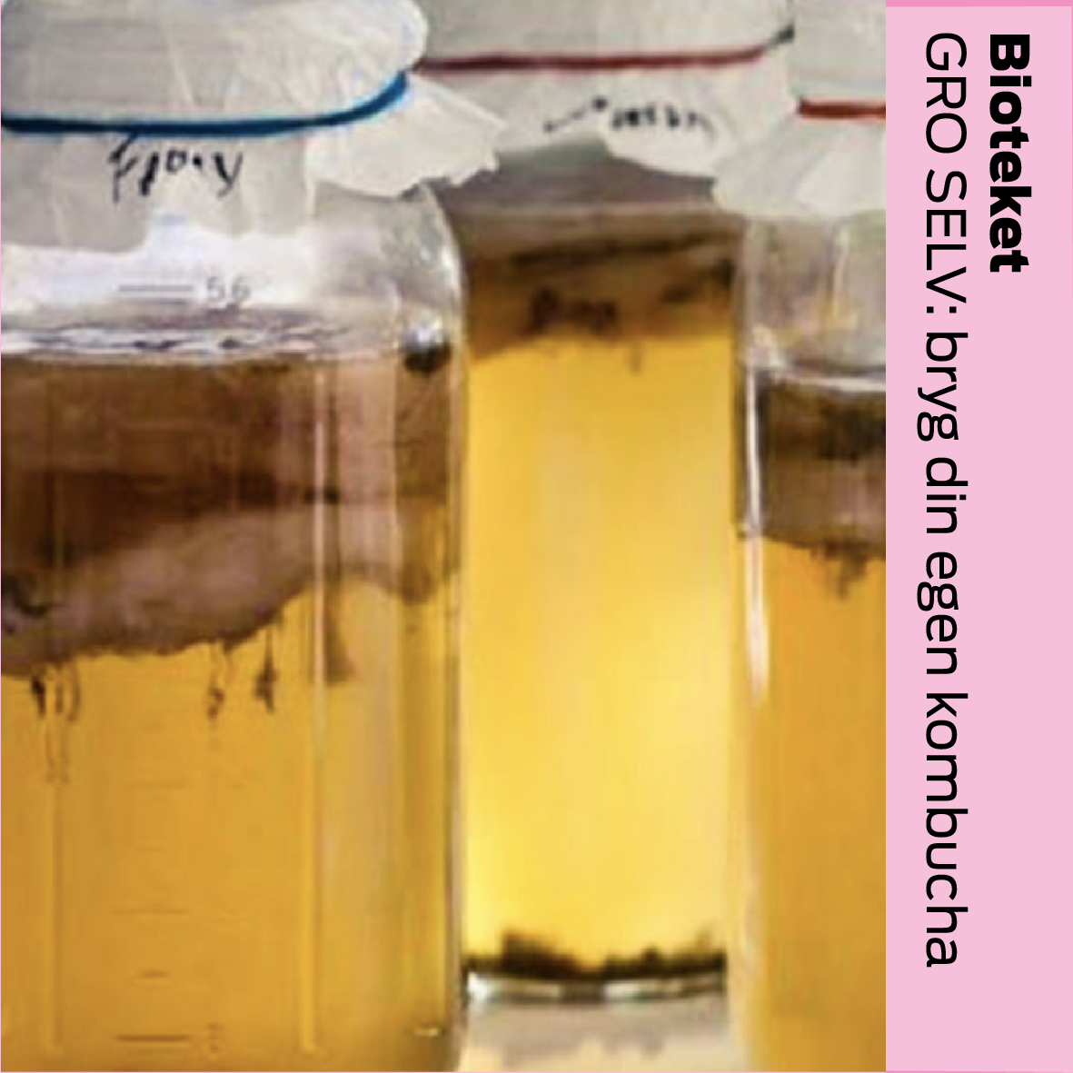 Bioteket & GRO SELV (DK): Dyrk din egen kombucha / grow your own konbucha