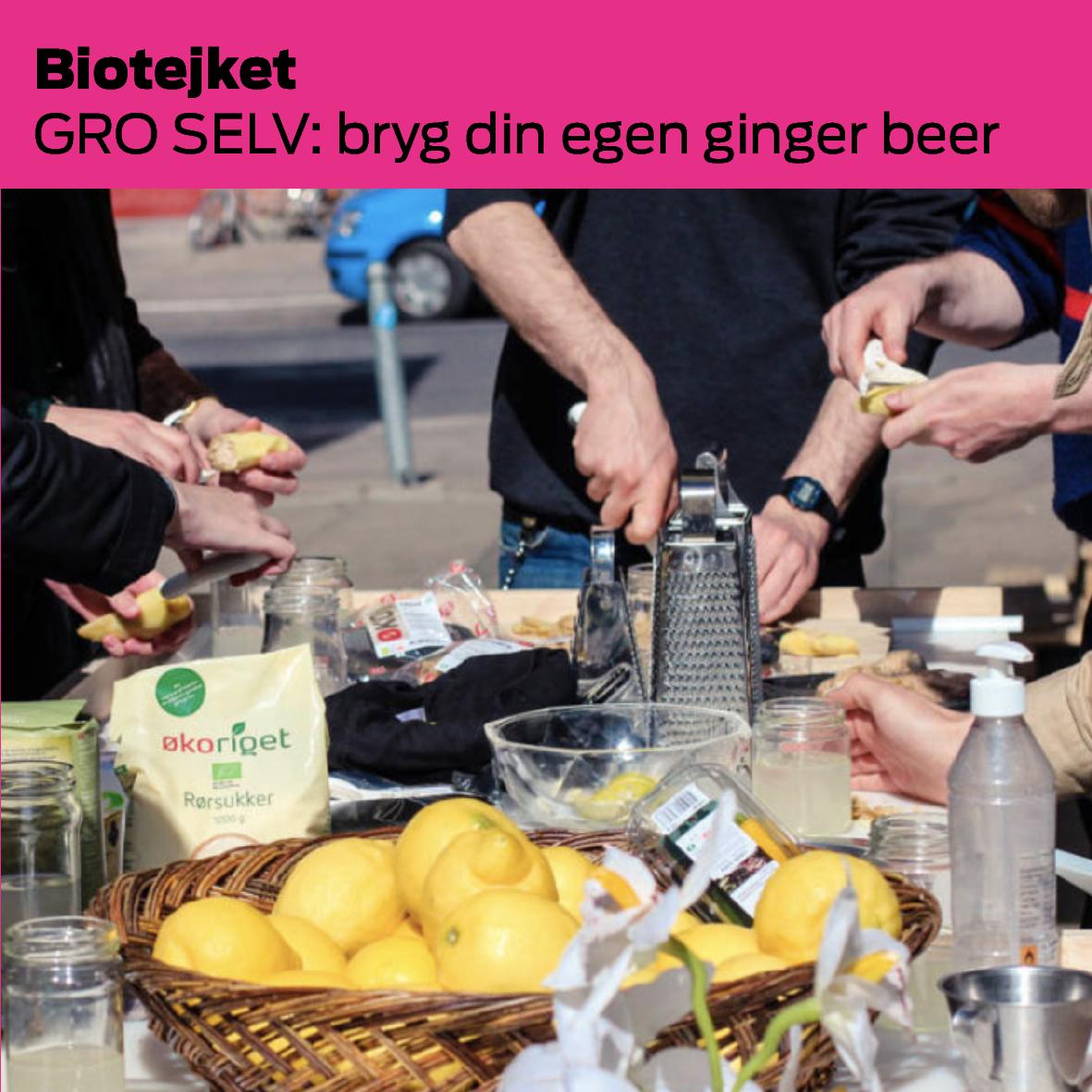 Bioteket & GRO SELV (DK): Bryg din egen ginger beer