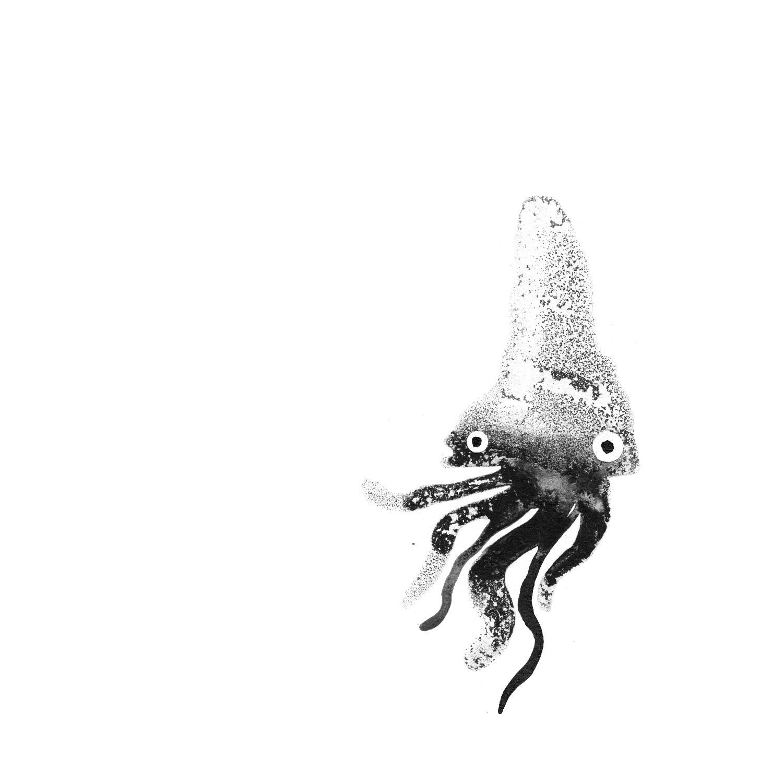squid5_2018.jpg