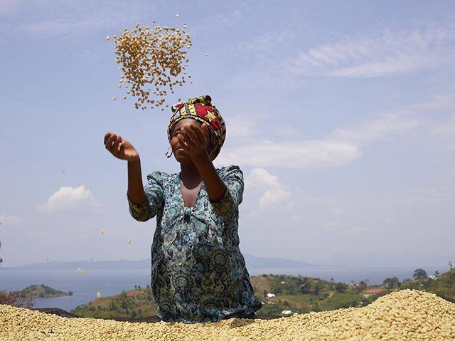 Good Saturday vibes in a cup. ☕️🇨🇩 Photo @vivianesassenstudio  #congolese  #womencoffee #organic #singleorigin #madewithlove #muungano #kivucoffee #congocoffee #drcongo #blackgold #lakekivu