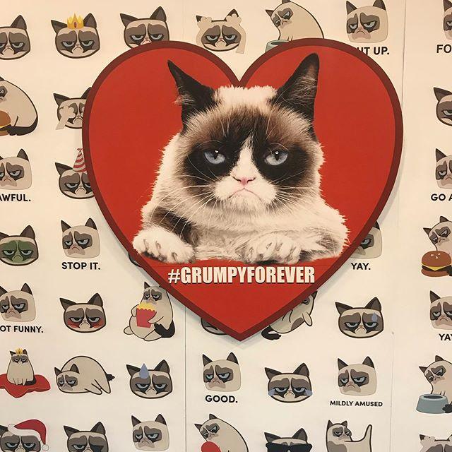 Not feeling grumpy today! #ferly #ferlyofficial #grumpycat #licensingexpo2019