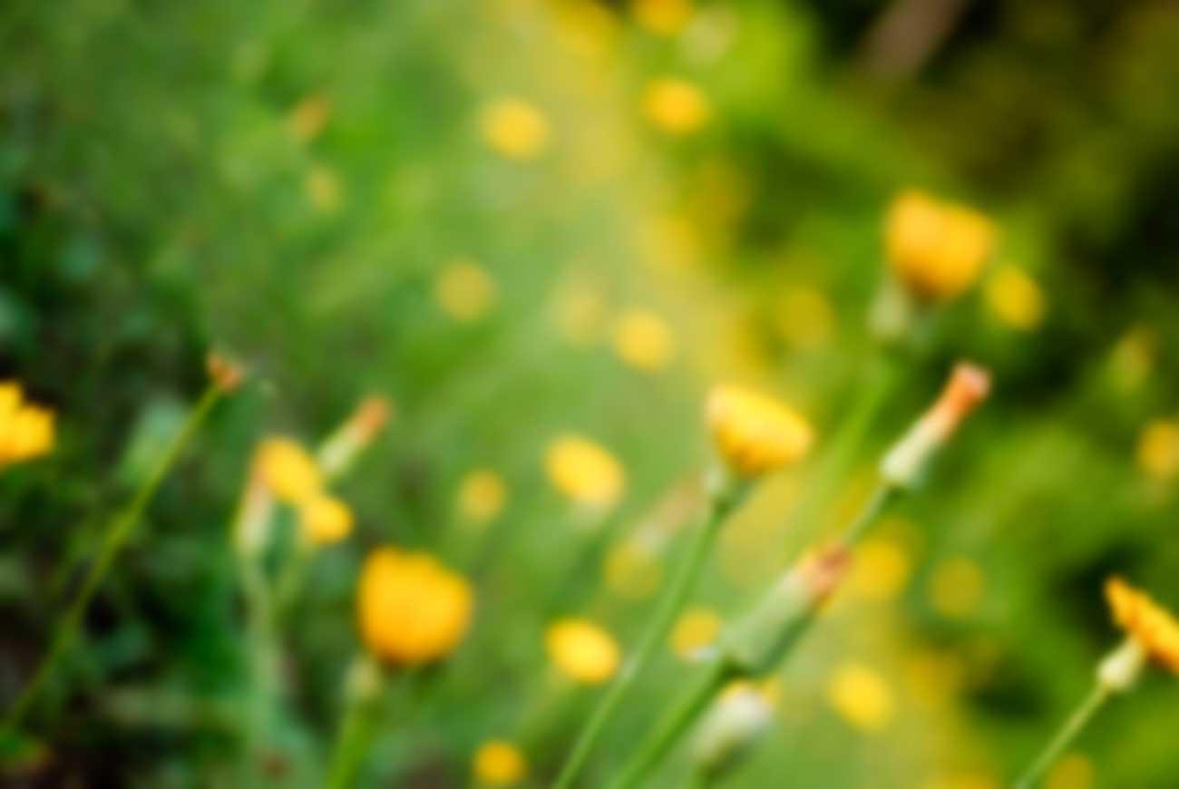generic_flowers.jpg