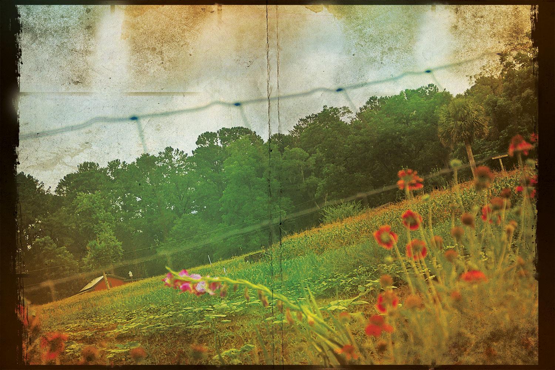 Cahill's farm