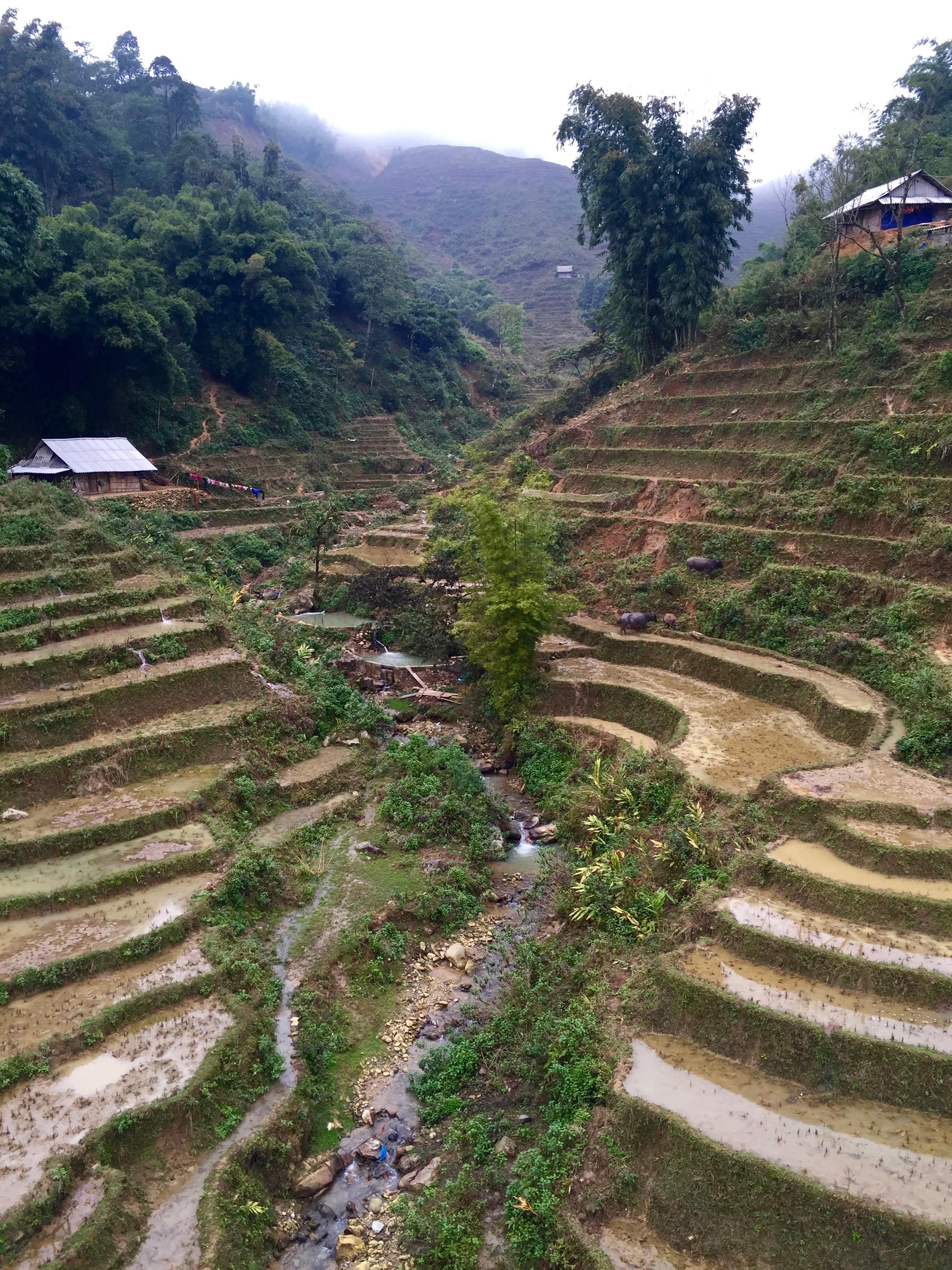 riceterrace