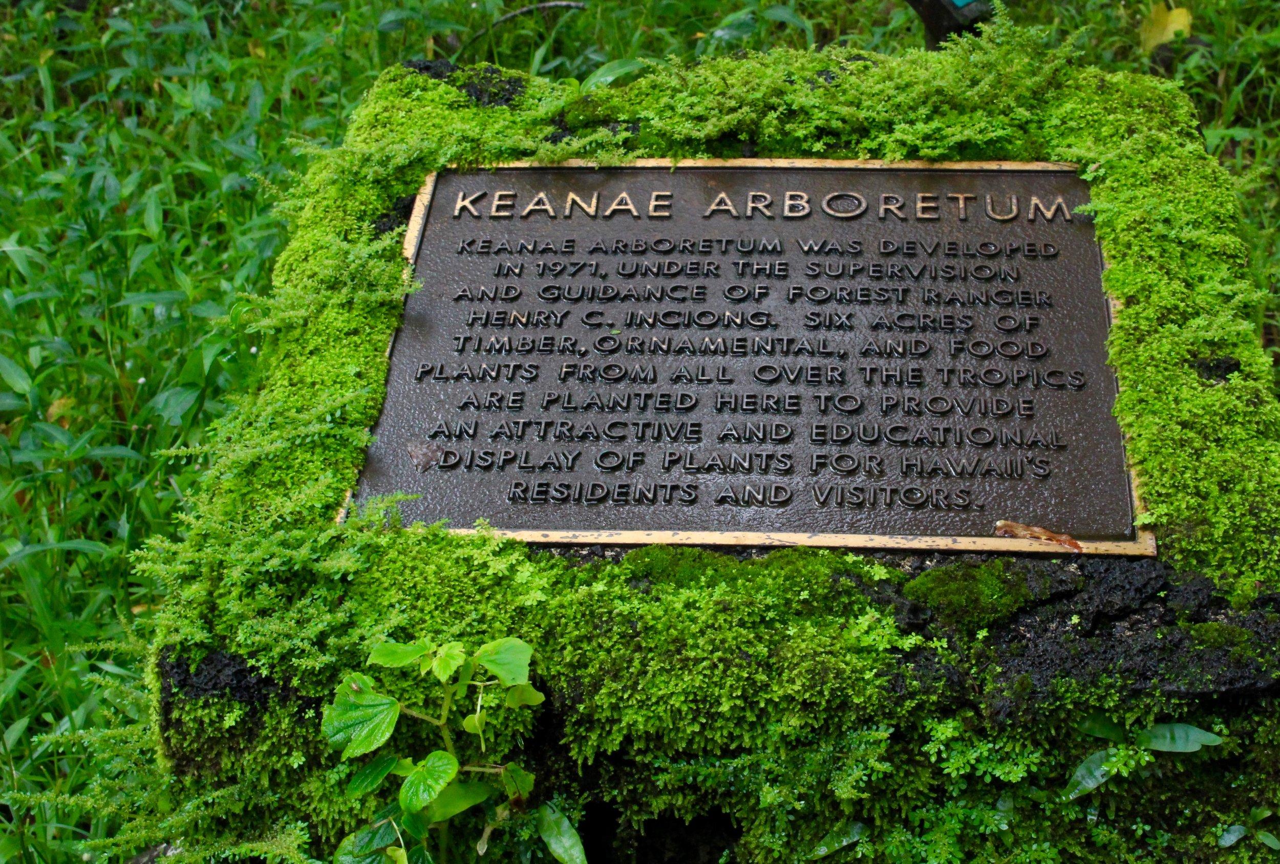 The Ke'anae Arboretum has over 150 varieties of tropical plants.