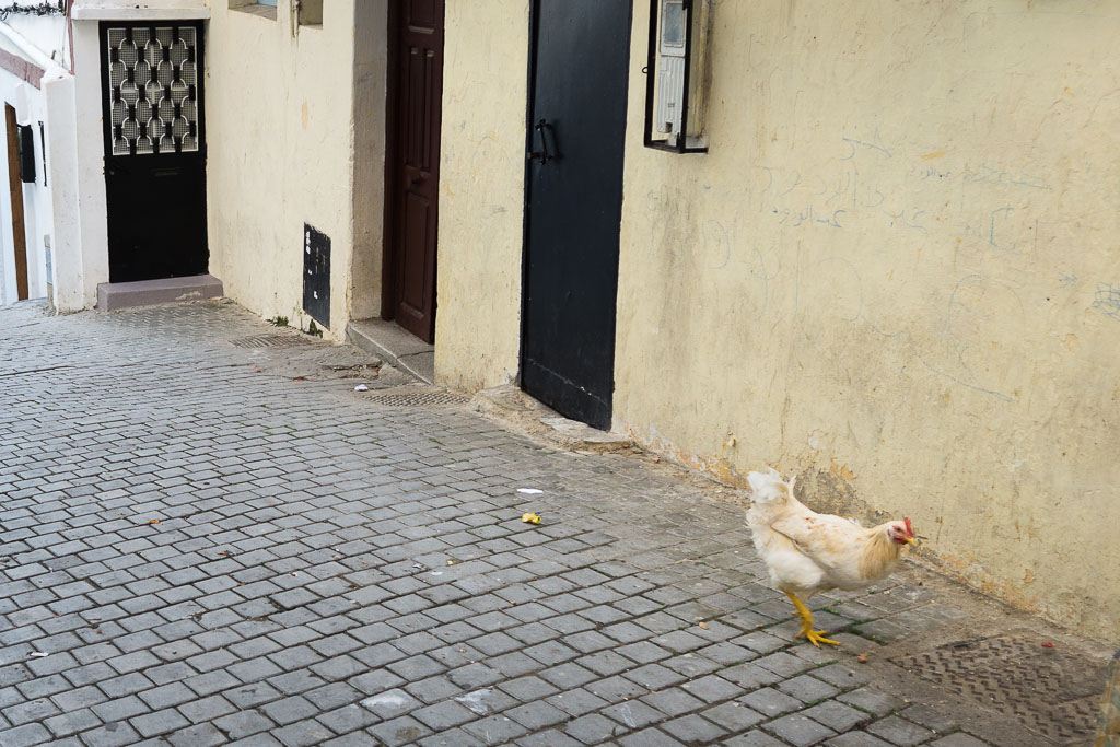 Just a casual chicken in the street. Welcome to Morocco!