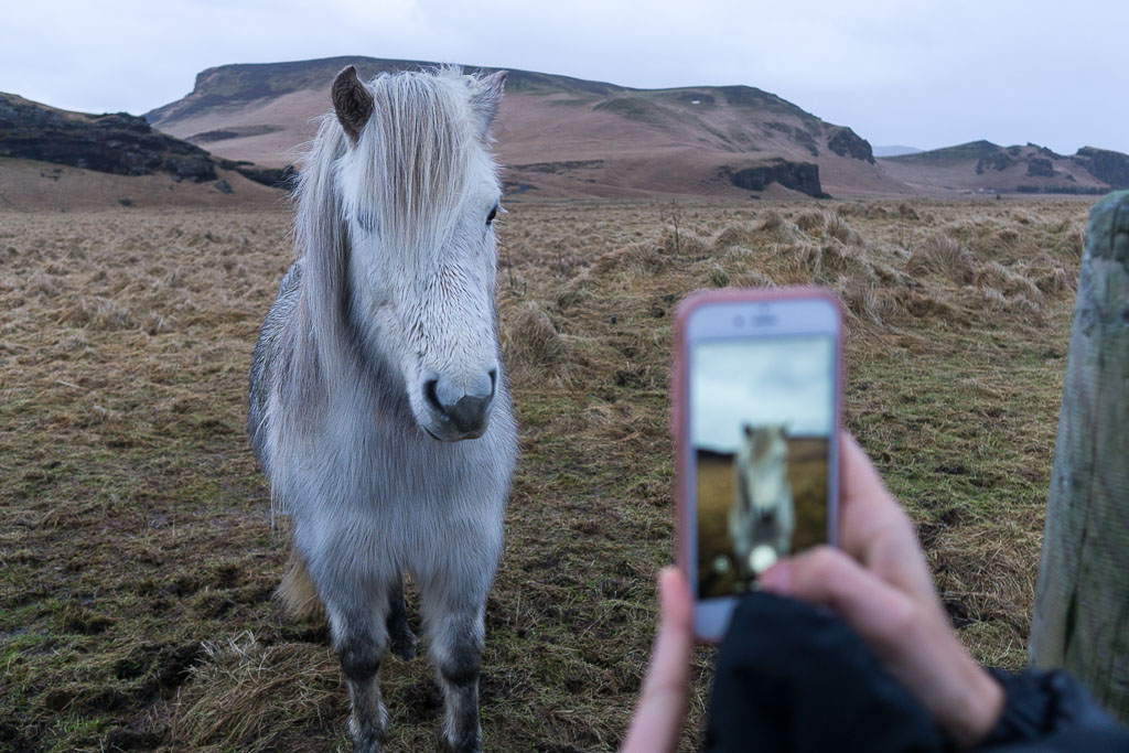 I could have played with the Icelandic horses for hours!