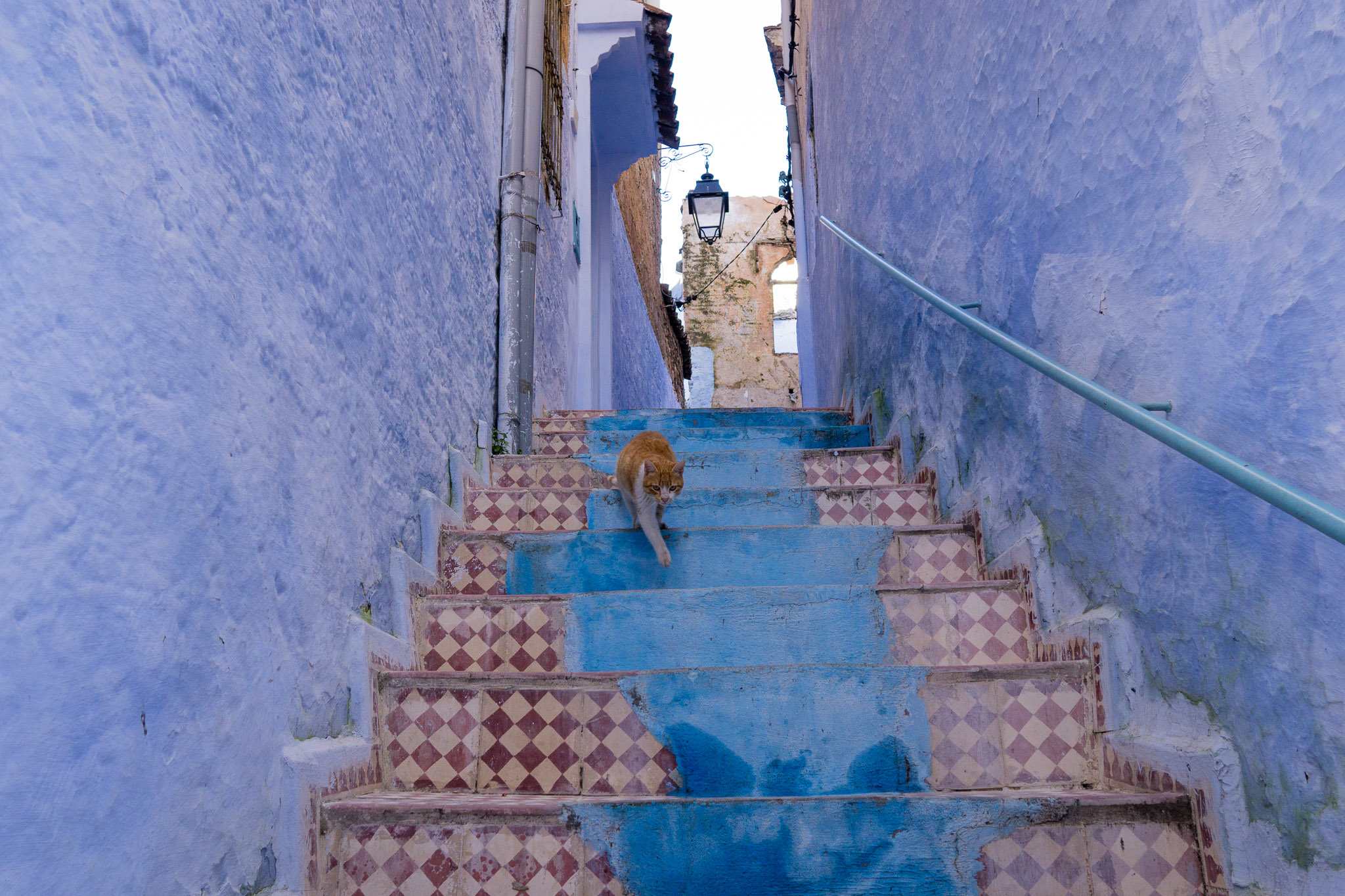 So many cats hanging out in Chefchaouen!
