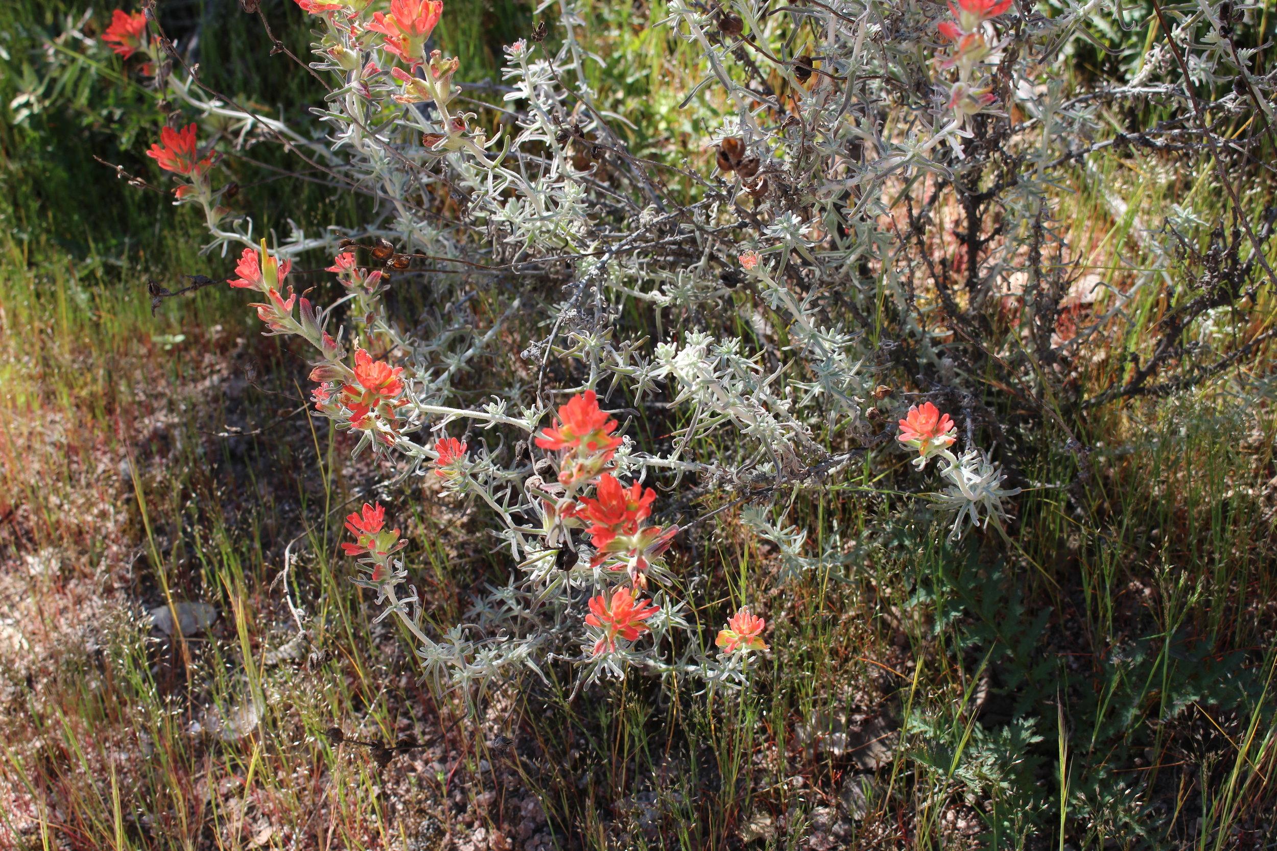 wild-flowers-california.jpg